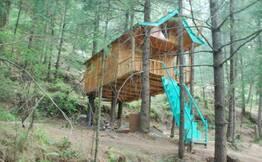 Treehouse Adventure in Shimla Hills