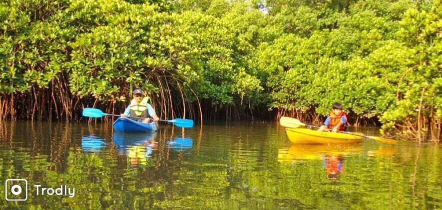 Mangrove Kayaking Near Candolim
