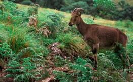 Chinnar Wildlife Tour