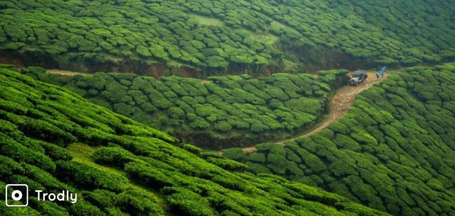 Kolukkumalai Jeep Safari - World Highest Tea Plantation
