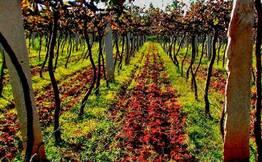 Wine Tour With Lunch near Nandi Hills, Bangalore