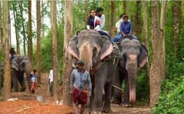 Ways Of An Elephant - Special Thekkady Day Tour