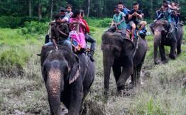 Thekkady Elephant Experience