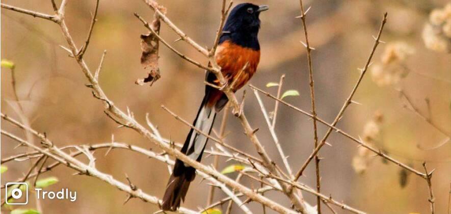 Birding Tour Through Coorg Coffee Plantation
