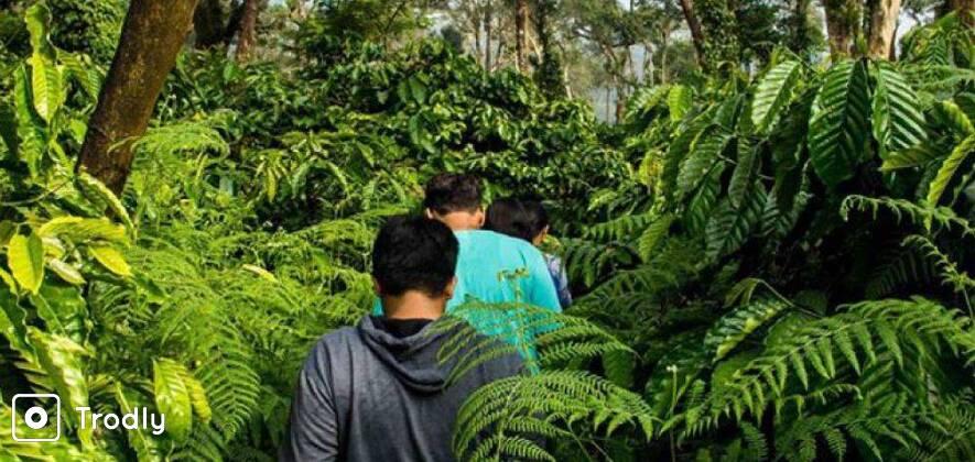 Trek To Brahmagiri & Camp Overnight In The Woods