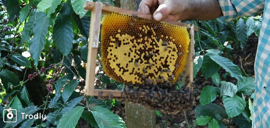 Beekeeping Tour
