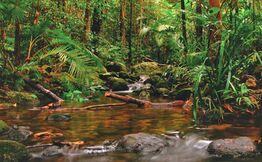 Sinharaja Rain Forest Day Trek from Colombo