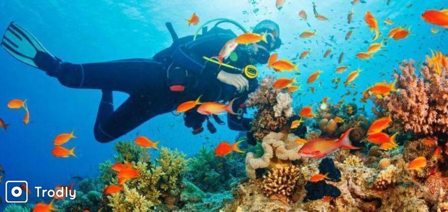Scuba Diving At North Bay Island