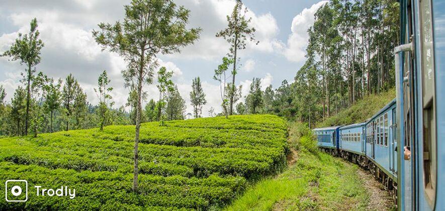 Nuwara Eliya Day Tour by Scenic Train Ride