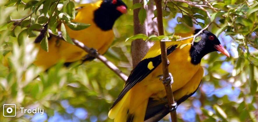 Birding Tour in Kumrakom
