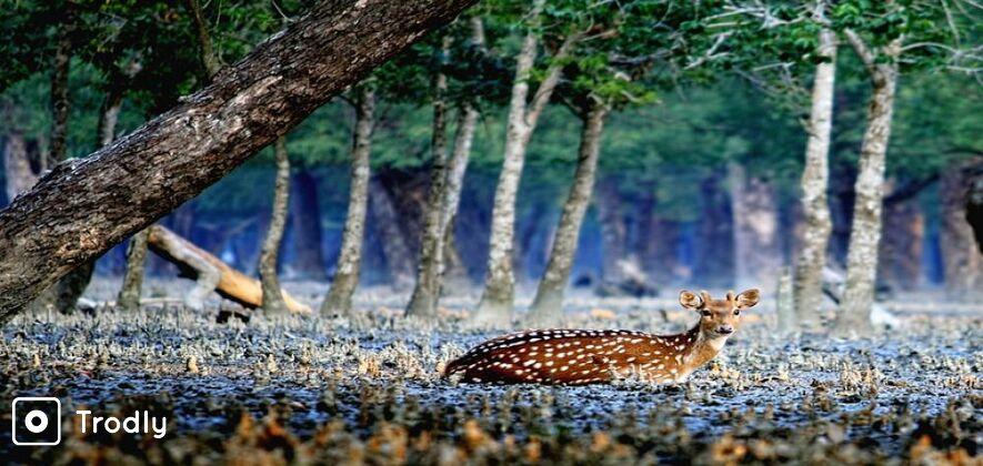 Sundarbans 2 Days and 1 Night Tour From Kolkata