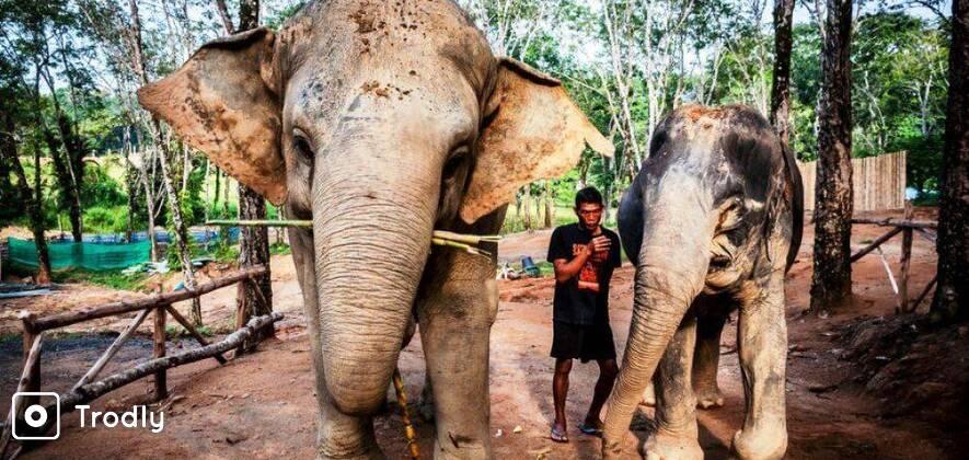 Elephant Sanctuary Half Day Tour in Phuket