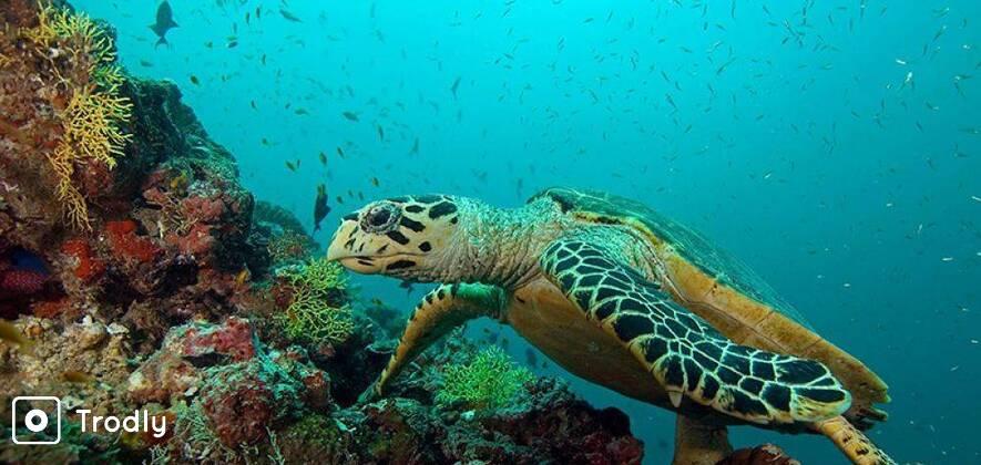 Scuba Diver 2 Day Course