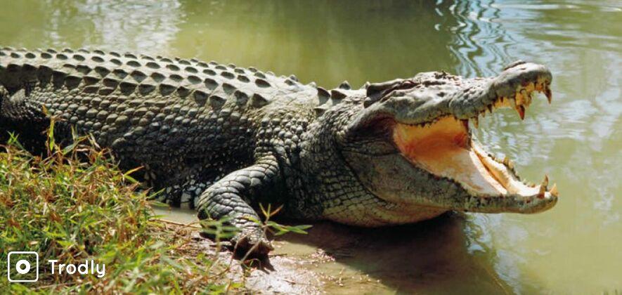 Bhitarkanika Wildlife Sanctuary Tour from Bhubaneswar