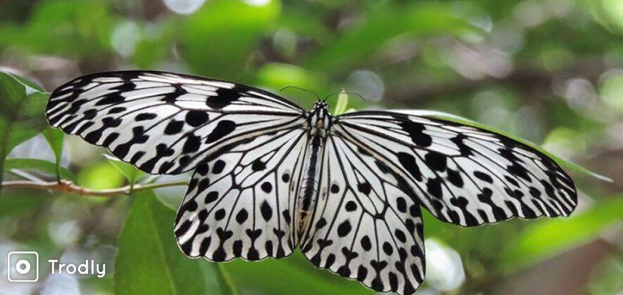 Short Tours in Sinharaja Rainforest