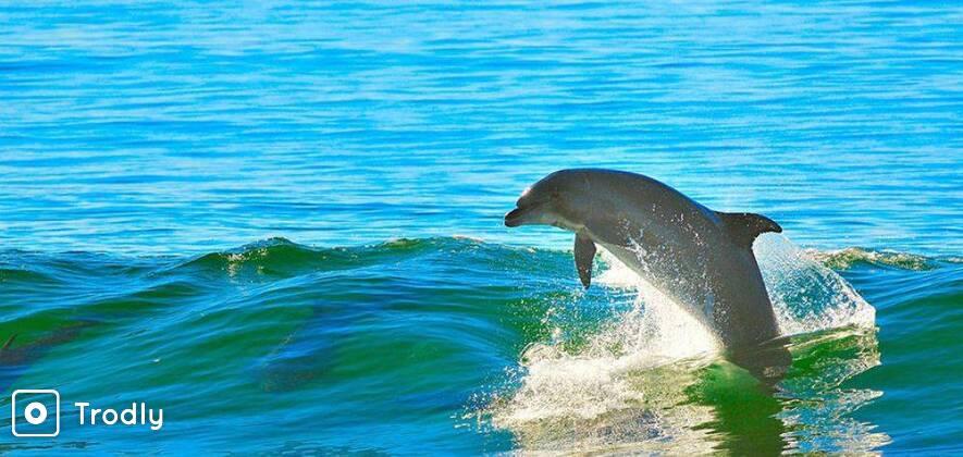 Goa Dolphin Spotting