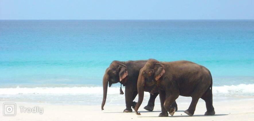 Enchanting Andamans - 5D/4N Package