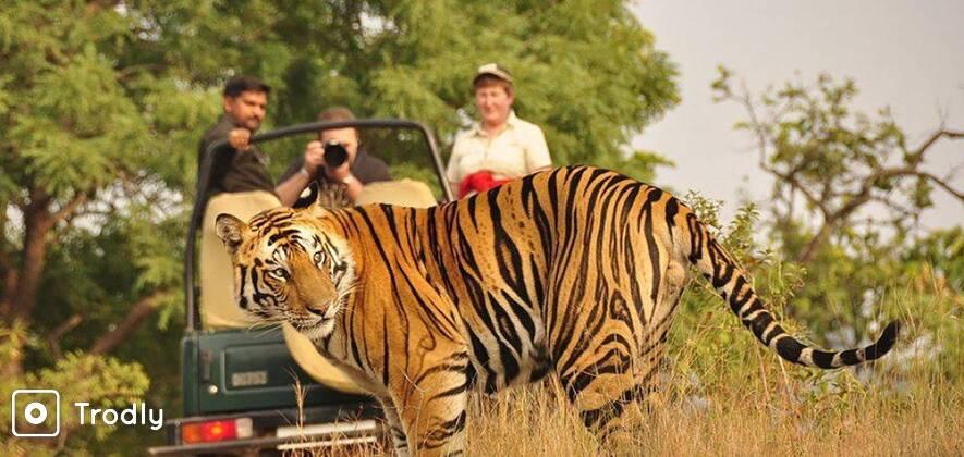 Ranthambhore Jeep Safari