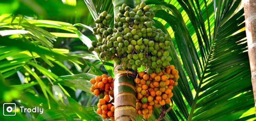 Dudhsagar Waterfall & Spice Plantation Tour in Goa
