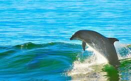Goa Dolphin Cruise: Private Boat
