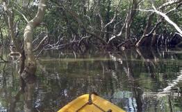 Kayak in Aguada Mangroves Goa