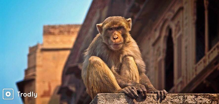Holi Special Offbeat Tour to Mathura - Vrindavan - Agra