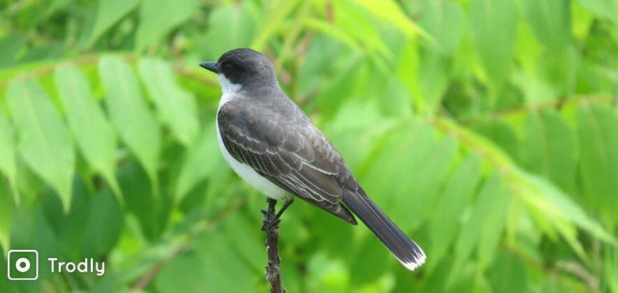 Bird Watching & Photography at Bhandup Pumping Station, Mumbai