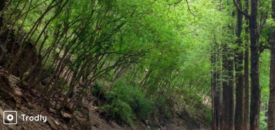 Mussoorie   Dhamba   Rishikesh Cycling circuit